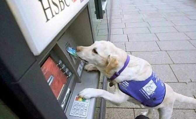 Service dog using an ATM machine