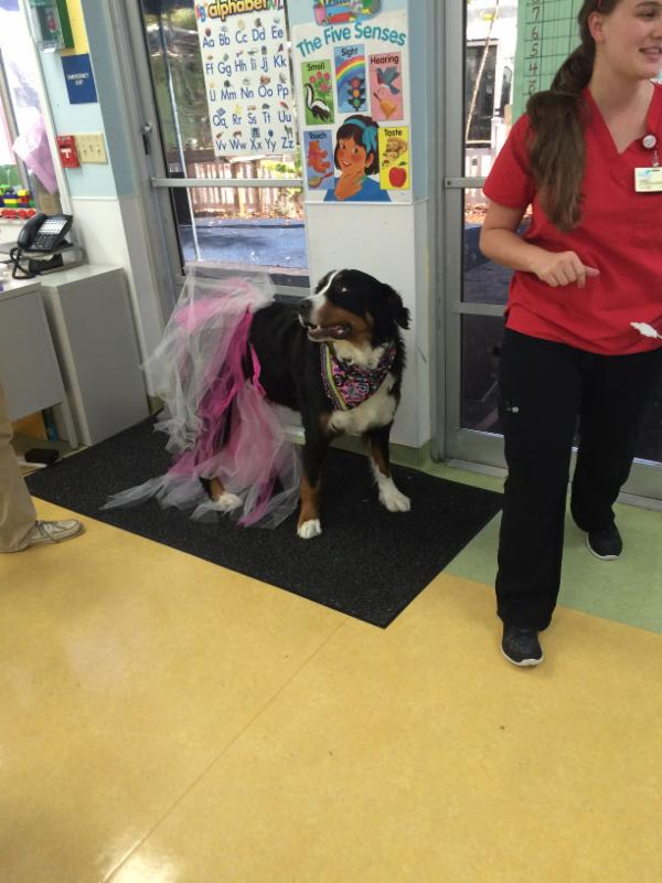 Cali the dog dressing up with the kids. Cali is wearing a pink tutu.