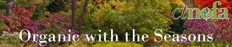 Fall Newsletter Header