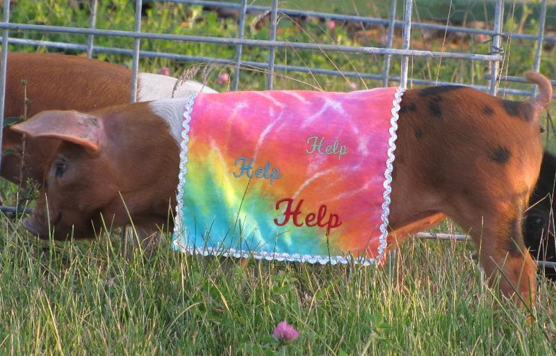 2013 pig race contestant