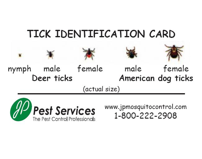 Jp Pest Services Summer Newsletter
