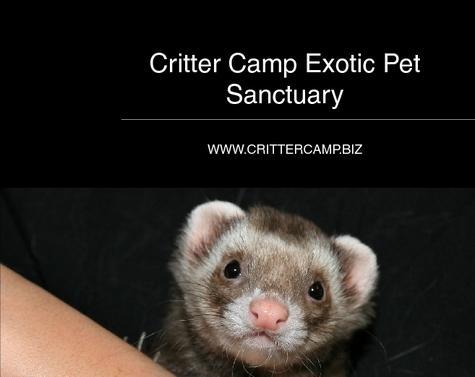 Critter Camp Book
