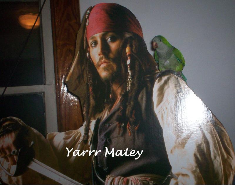 Yarr Matey