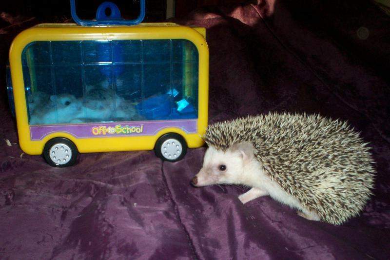 hamster hedgehog