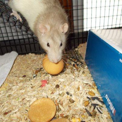 ratty cookie