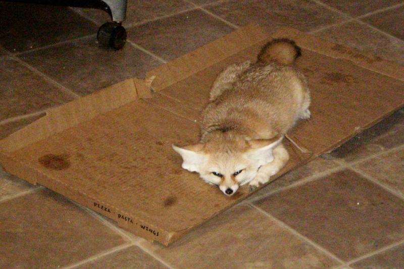 may quig pizza box
