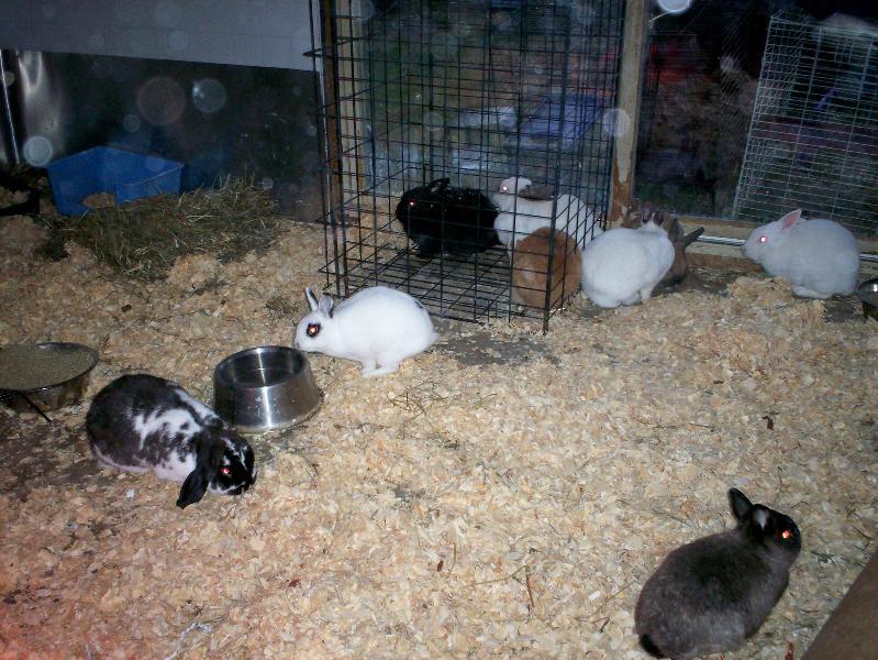 Bunnies inbunny haven