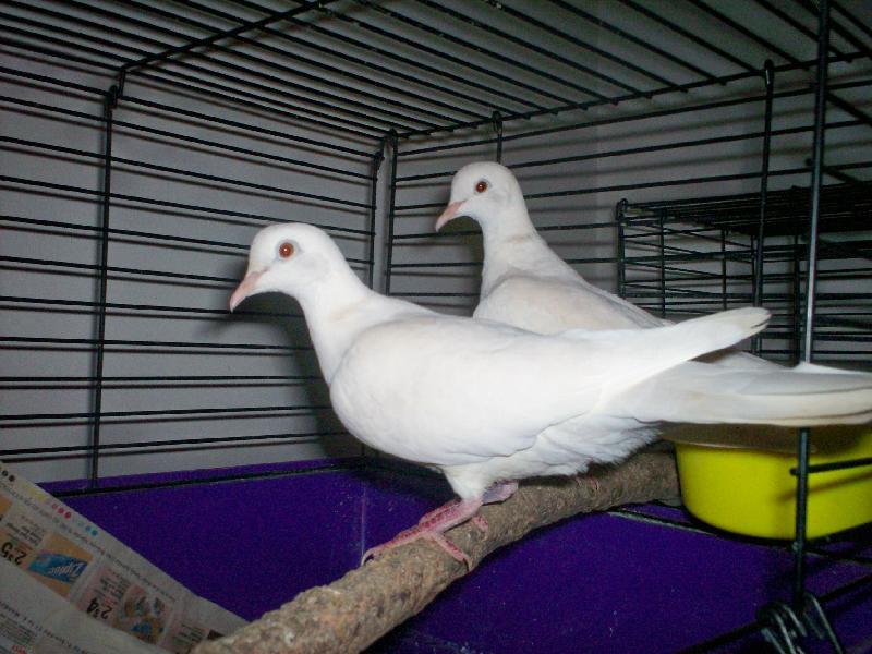 2 girl white doves