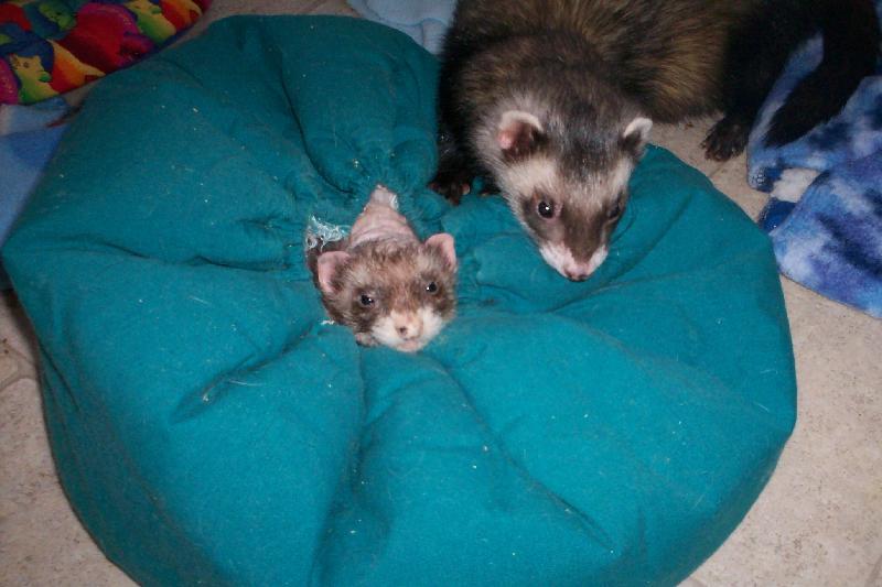 Mellow & Felix