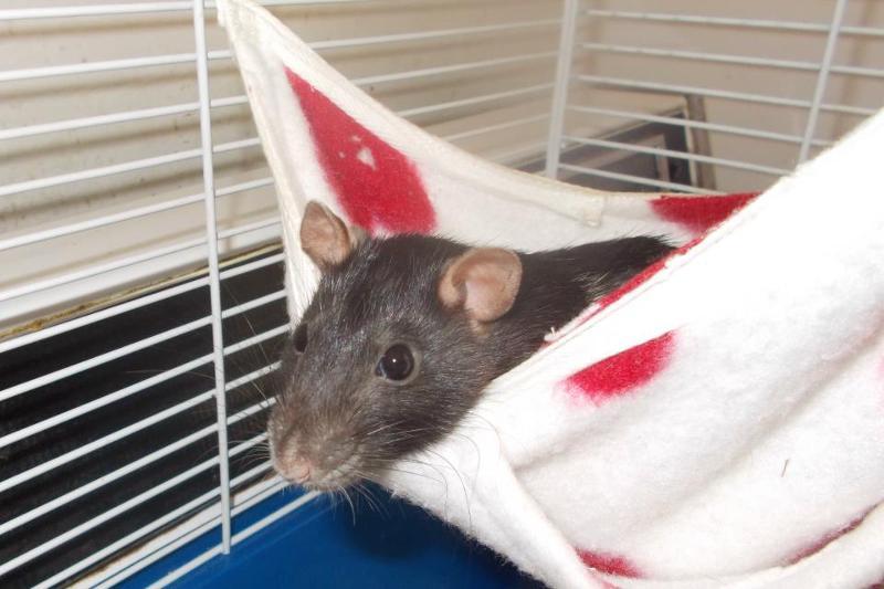 maddy rat