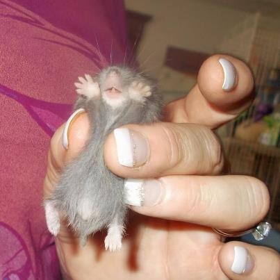 cutest hammy