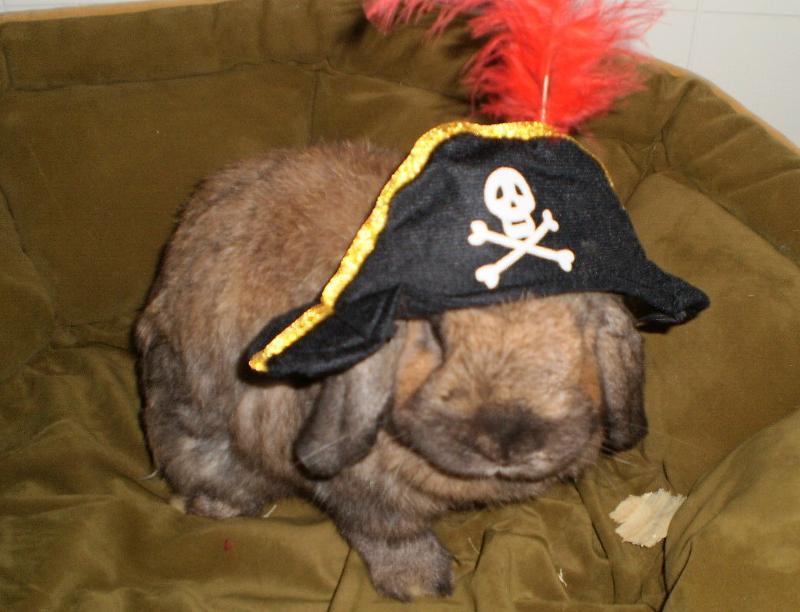 pirate bill