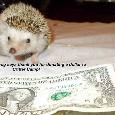 lucy dollar