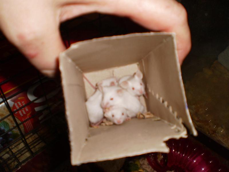 jan baby mice 3