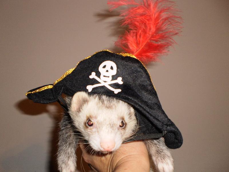 2011 pirate big al