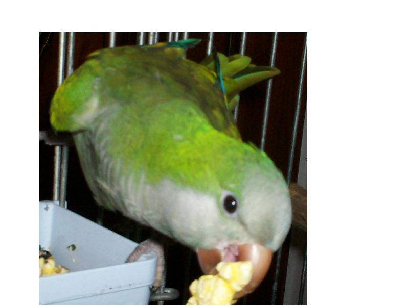 Peter eating popcorn