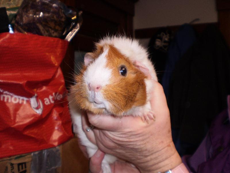 piggy cinnamon