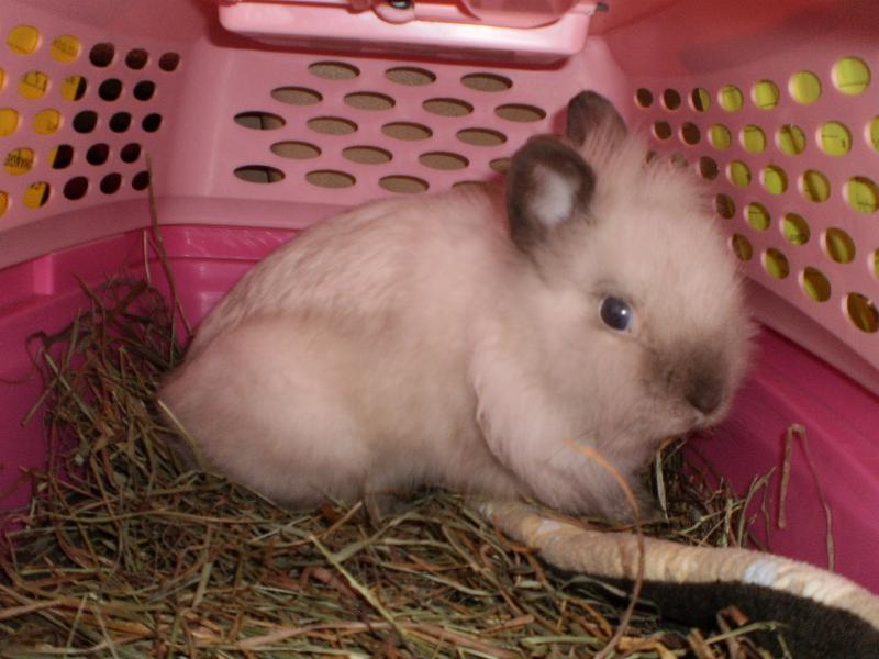 rabbit stitches