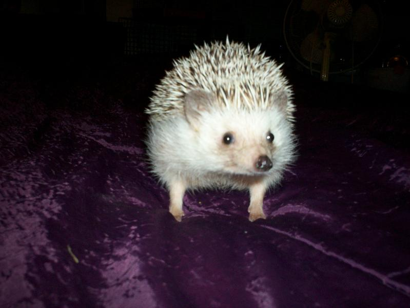 mister snuffy