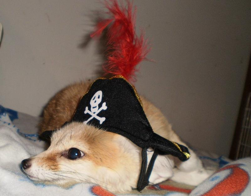 wiley pirate 2011