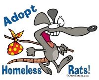 adopt rats