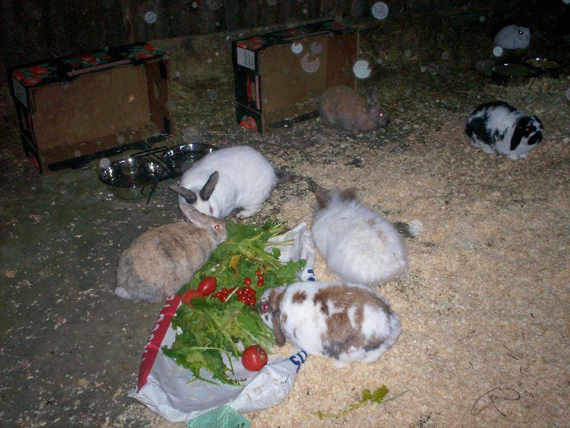 happy buns!