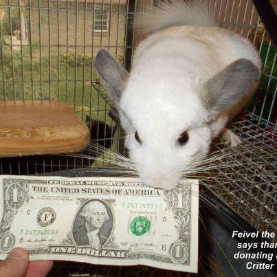 feivel dollar