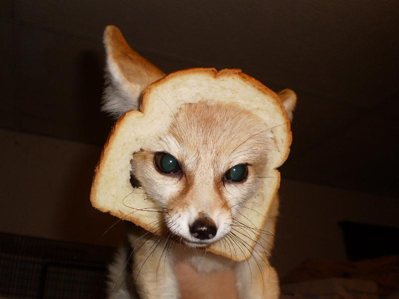 wiley bread