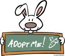 adopt bunny t