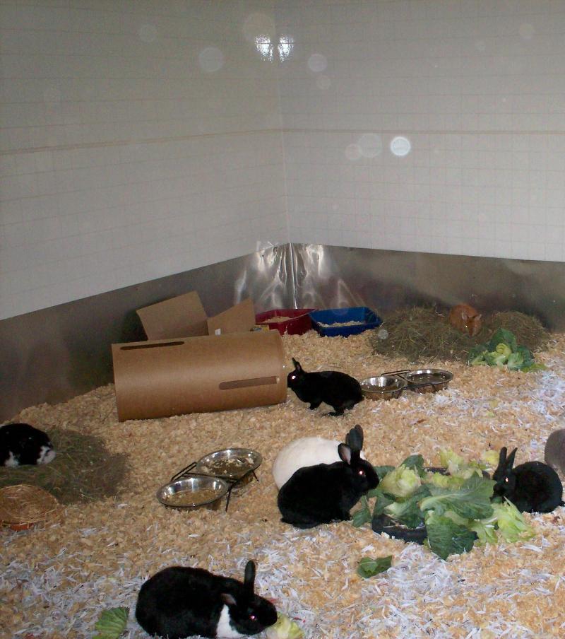 bunny haven