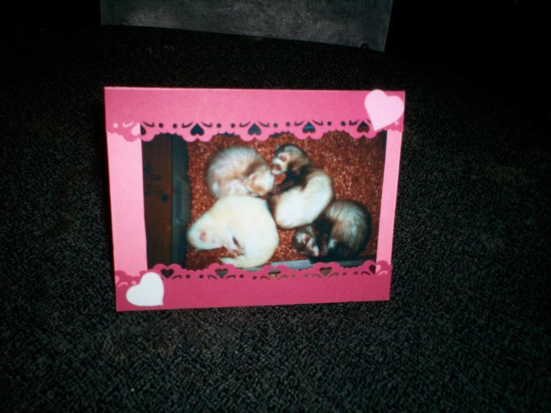 card ferrets