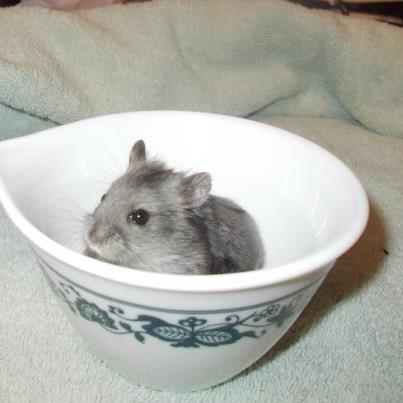 ham in cup