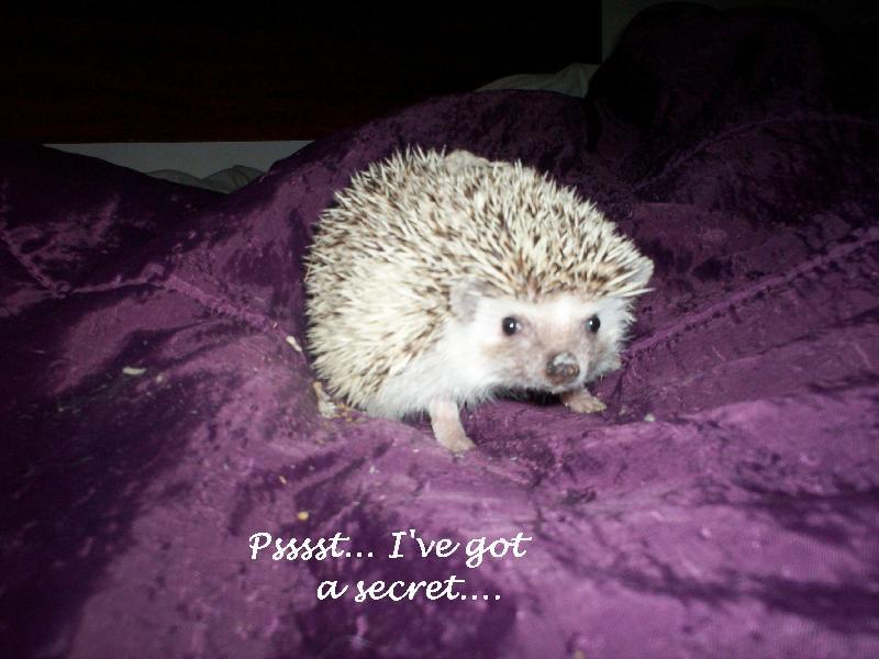 psst i've got a secret!