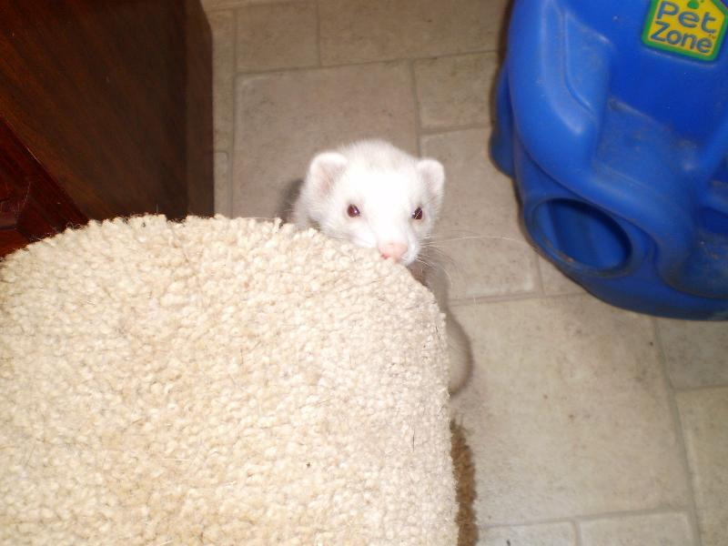 buddy peeking