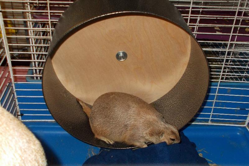 charlie wheel