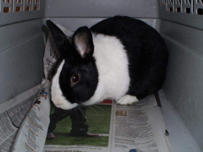 rabbit thumper