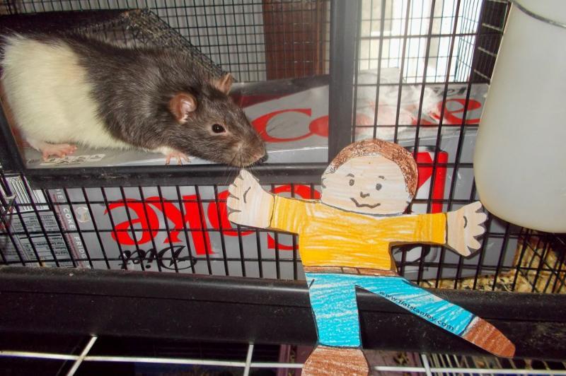 news flat rat