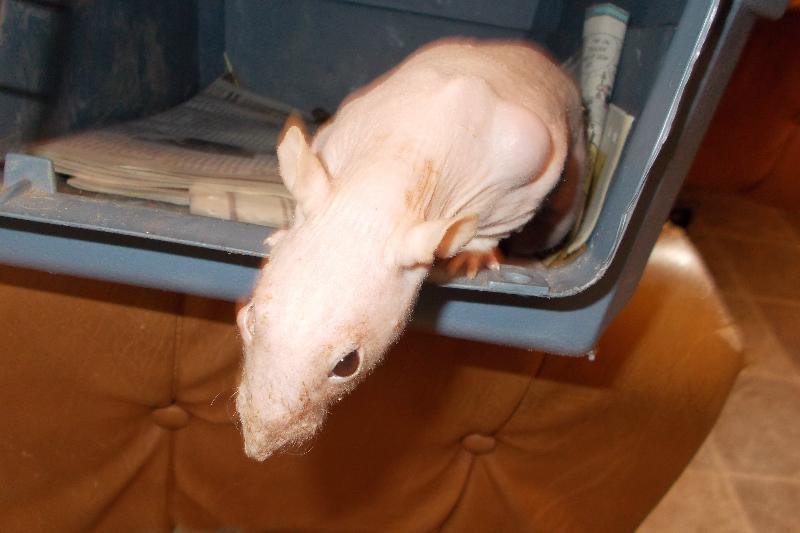 logan ratty