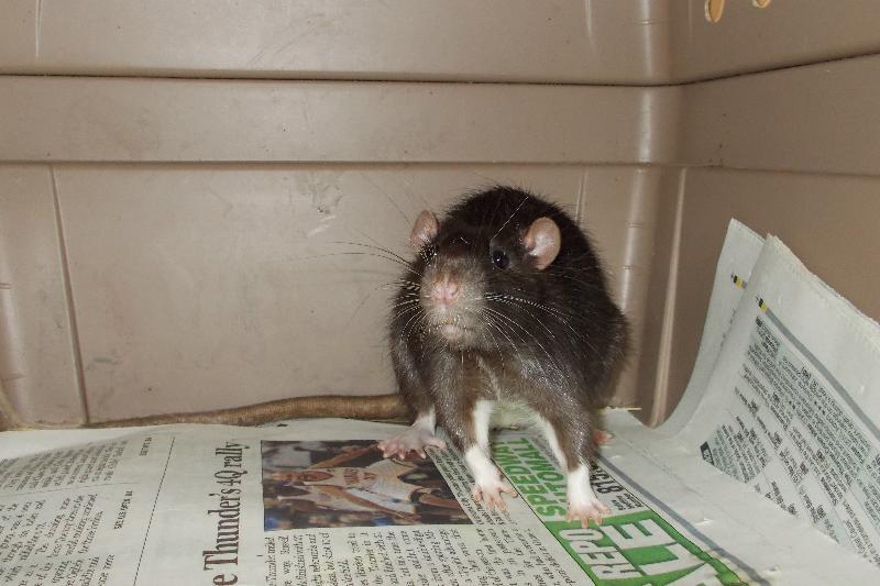 chester ratty