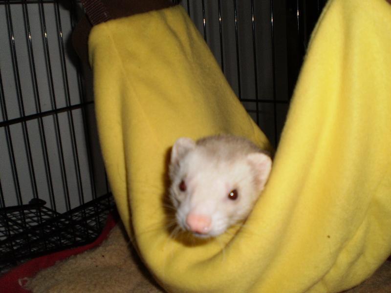 buddy in banana
