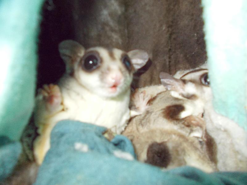 family of 5 gliders