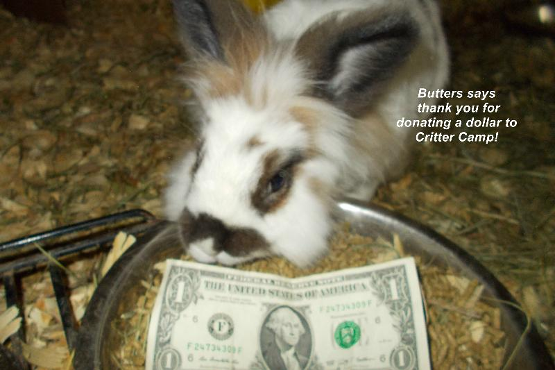 butters dollar