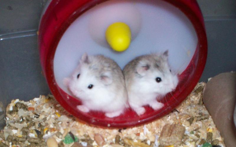 2 hams