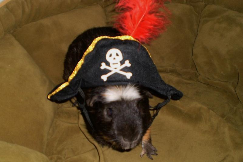 pirate fonzi