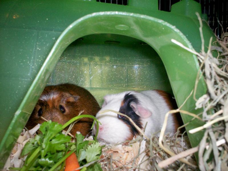 Penny&Clover
