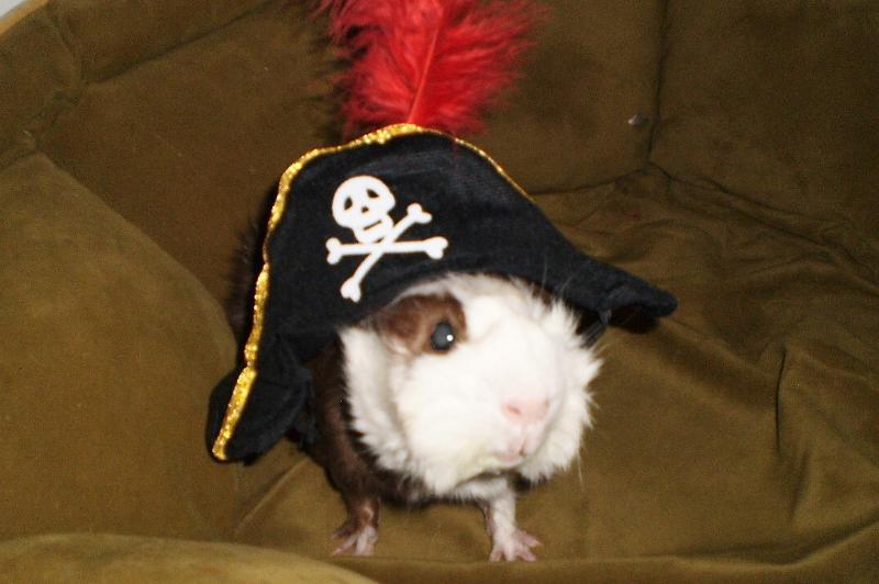 piglet pirate