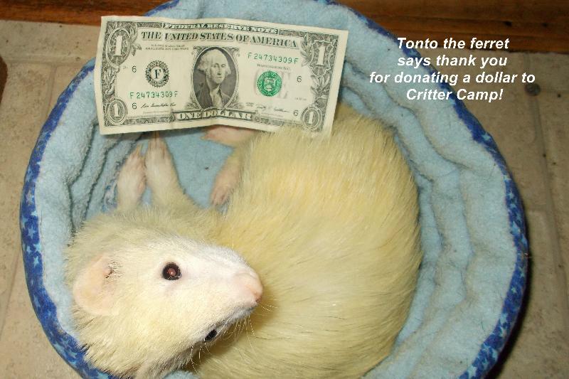 tonto dollar