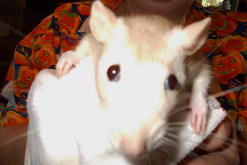 gracie joy ratty