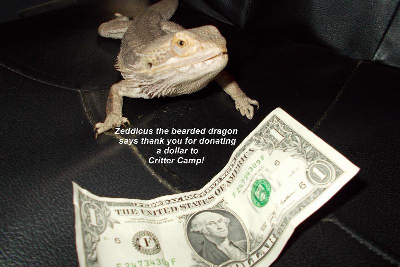 zed dollar