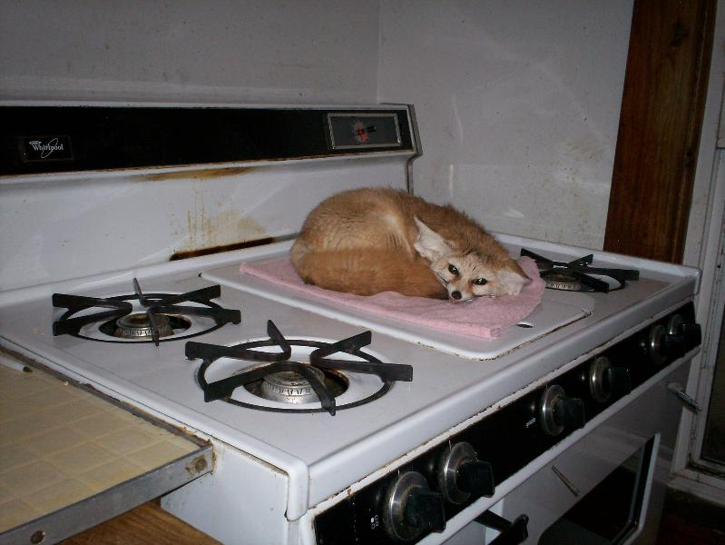 Quiggly on the stove